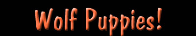Wolf Puppies Nameplate